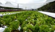 Rezoning submission for Central Coast hydroponics business